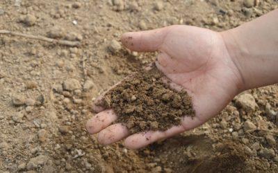 La importancia del principio de las 4R en el uso de fertilizantes.