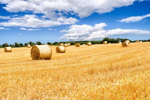 El Gobierno reduce el IRPF para estimación objetiva (módulos) a agricultores y ganaderos.