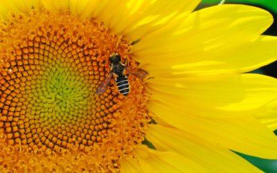 La Unión Europea prohíbe la aplicación al aire libre de insecticidas neonicotinoides